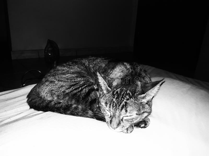 睡眠猫 免版税库存照片