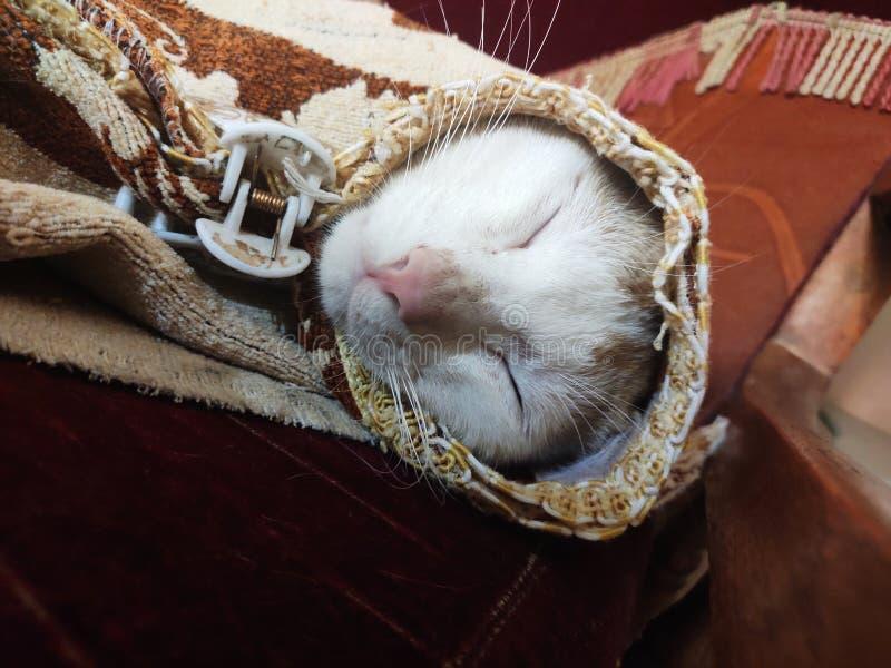 睡美人猫 图库摄影