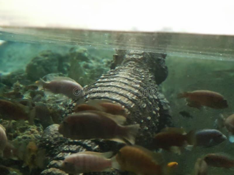 睡觉与鱼 免版税库存图片