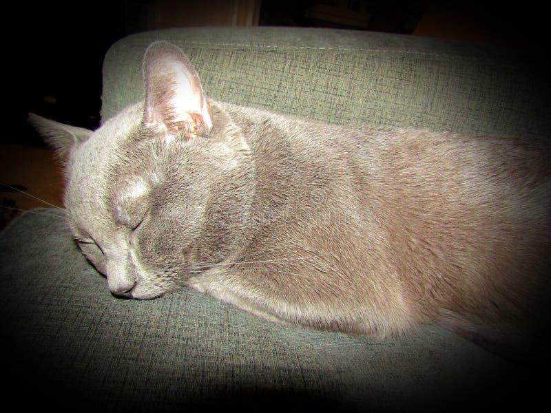 睡觉全部赌注猫 免版税库存照片