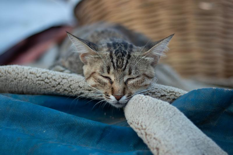 睡觉在一个被折叠的地毯的睡眠猫在一热的天户外 免版税库存照片
