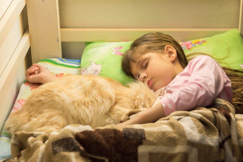 睡觉在与猫的床上的小女孩 库存图片