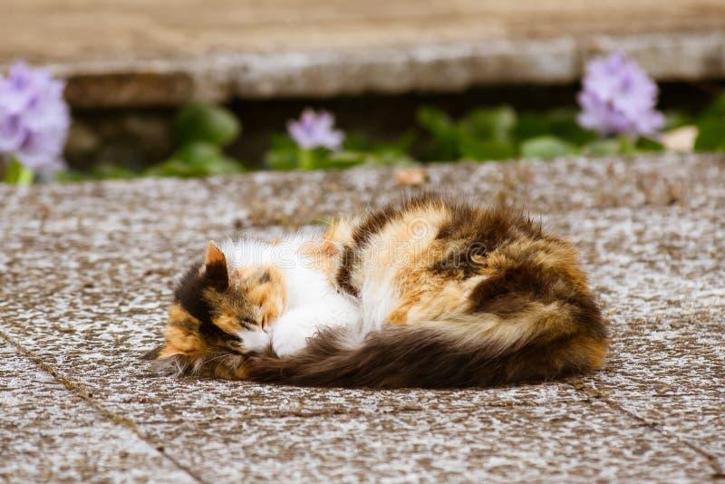 睡觉在地面的呈杂色的猫 免版税库存照片