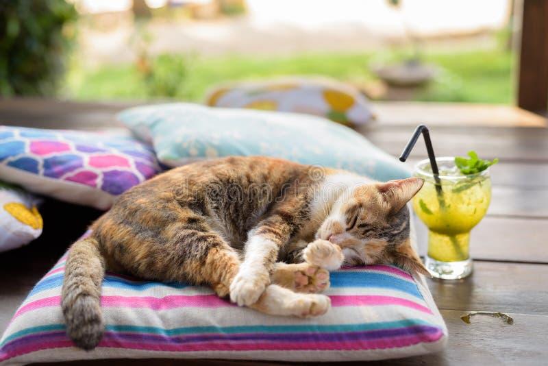 睡觉在坐垫的逗人喜爱的杂色猫 免版税库存照片