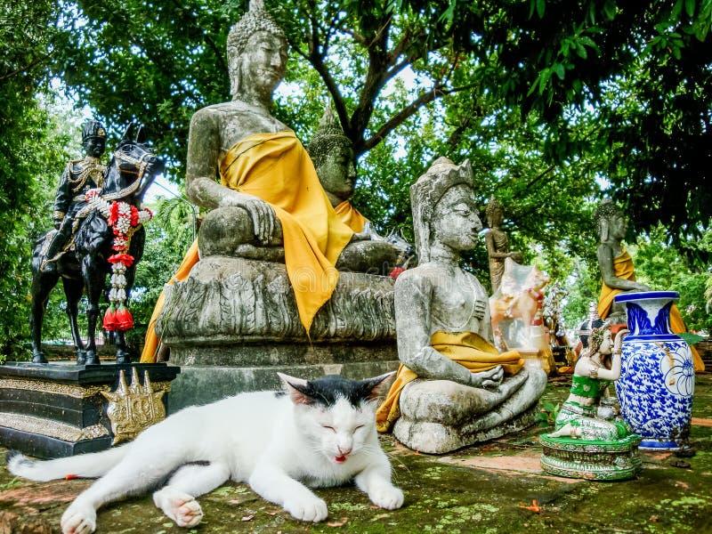 睡觉在墙壁上的白色猫 免版税库存照片