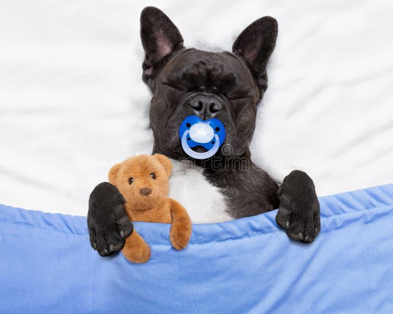 睡觉在床上的狗 免版税图库摄影