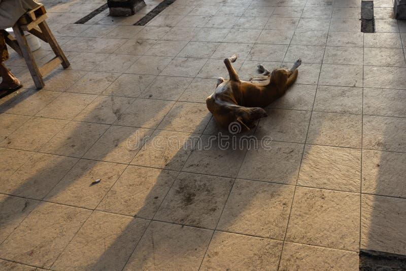 睡觉在早晨太阳的地板上的一条黑巴厘岛狗,背景给一个非常有吸引力的背景阴影 免版税库存照片