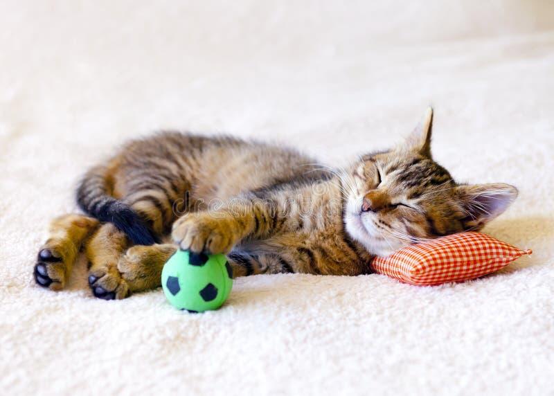 睡觉在枕头的小猫 免版税库存照片
