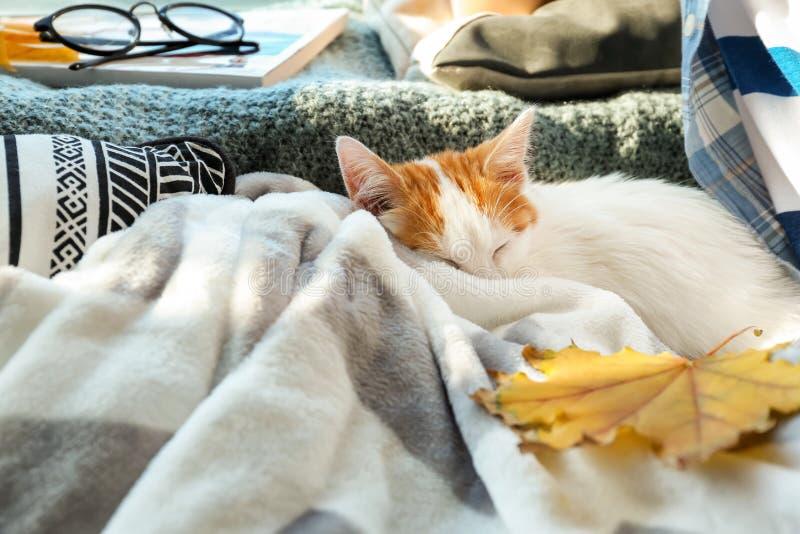 睡觉在格子花呢披肩的逗人喜爱的小的小猫 免版税库存照片