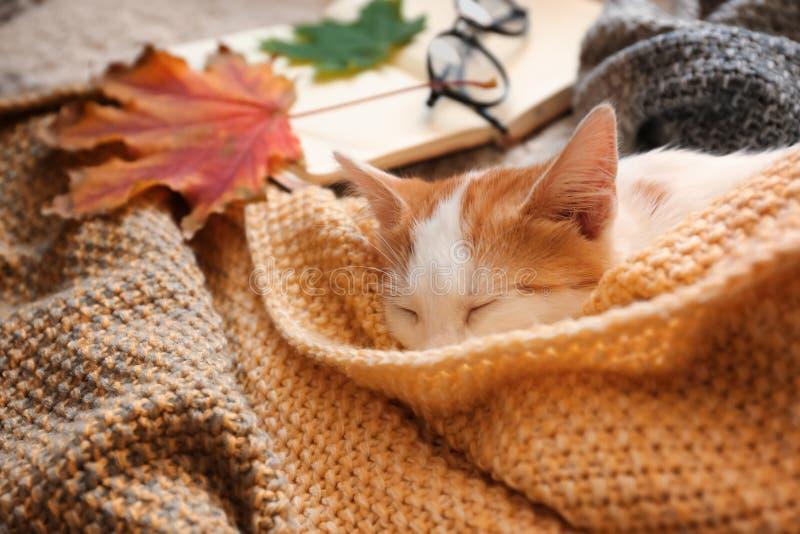 睡觉在格子花呢披肩的逗人喜爱的小的小猫 图库摄影