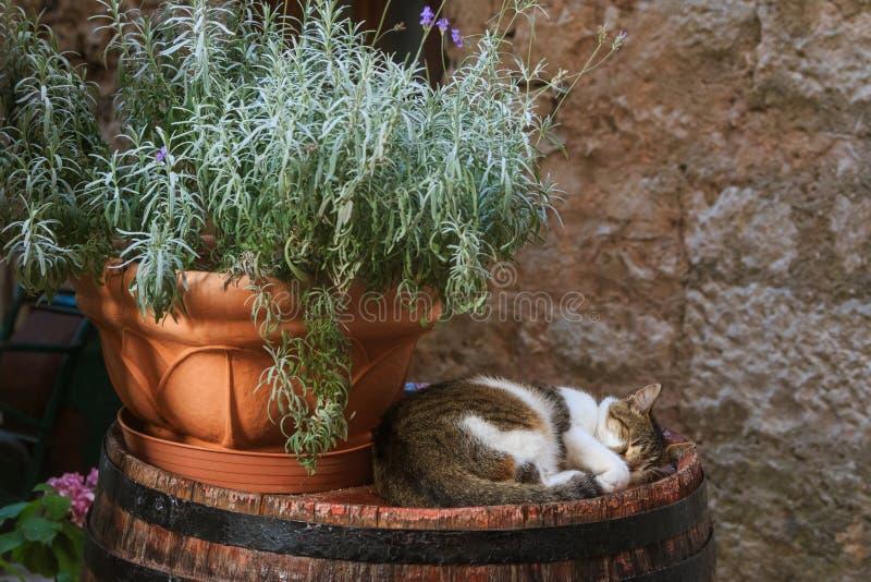 睡觉在桶的上面的猫 图库摄影