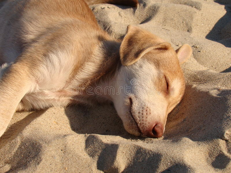 睡觉在沙子的小狗 免版税库存照片
