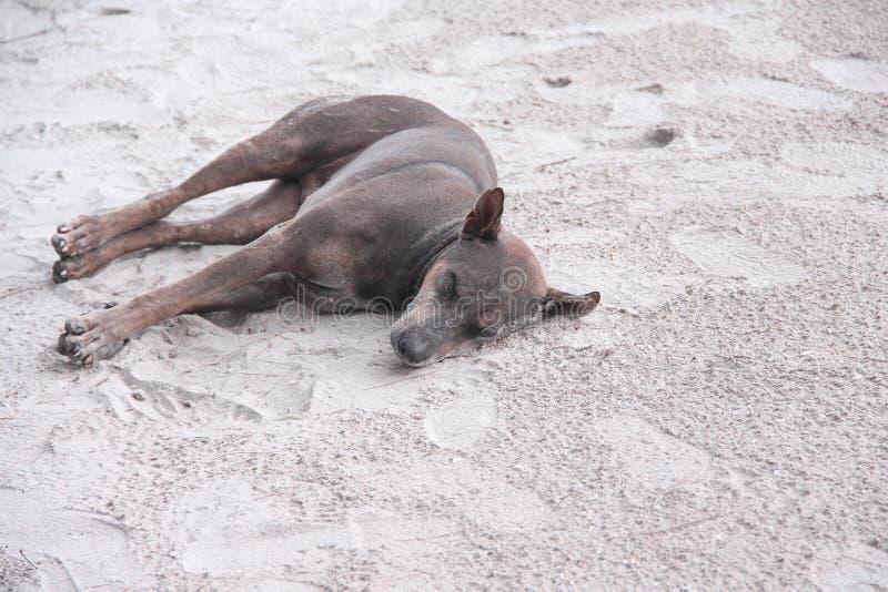 睡觉在海滩的唯一棕色或沮丧在自然沙子背景的晚上 免版税库存照片