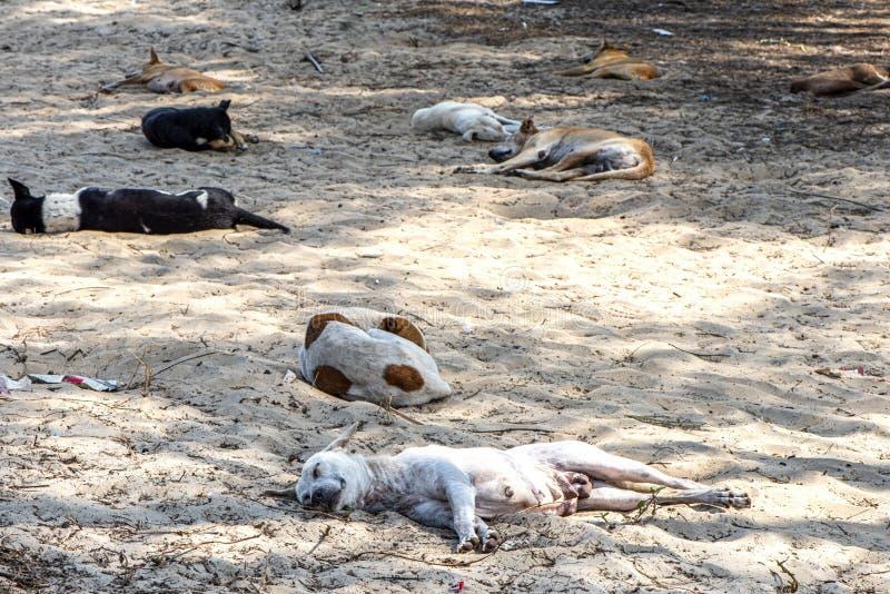 睡觉在海滩的狗 免版税库存照片