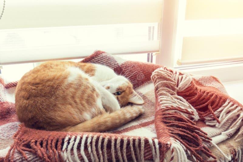 睡觉在温暖的羊毛格子花呢披肩毯子的红色猫 免版税库存照片