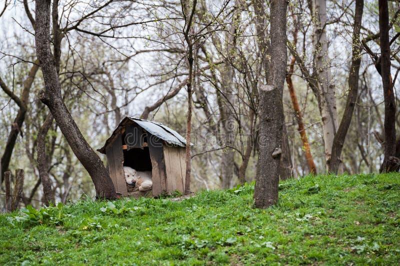 睡觉在狗屋的护卫犬在庭院里 免版税库存图片
