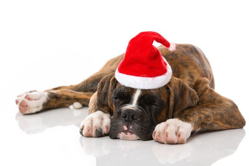 睡觉在白色隔绝的圣诞节小狗 免版税库存图片