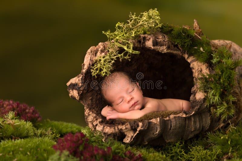 睡觉在空心树树干的婴孩 免版税库存照片