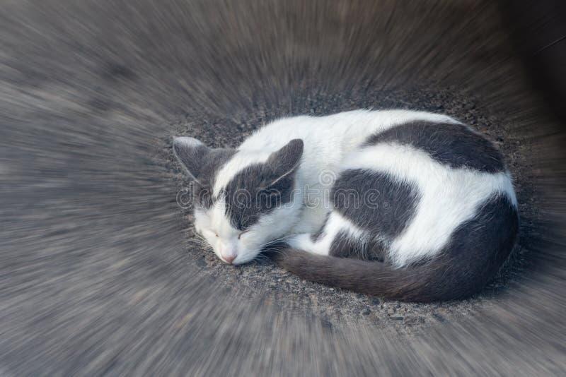 睡觉在路面特写镜头的灰色白色猫 库存图片