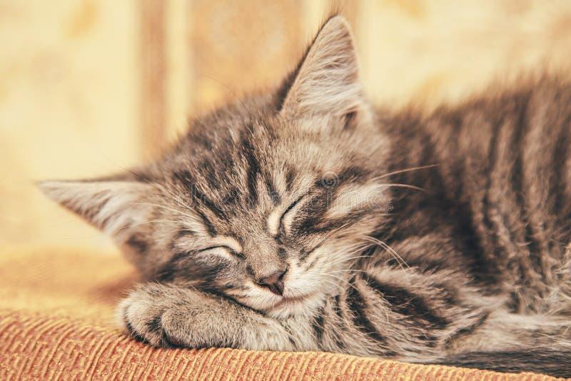 睡觉在长沙发的灰色小猫 免版税库存图片