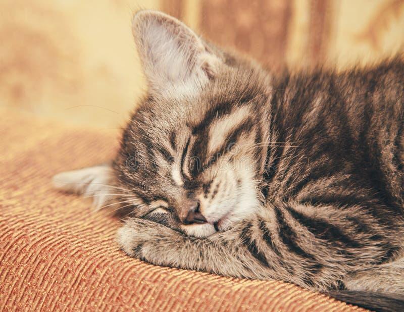 睡觉在长沙发的灰色小猫 图库摄影