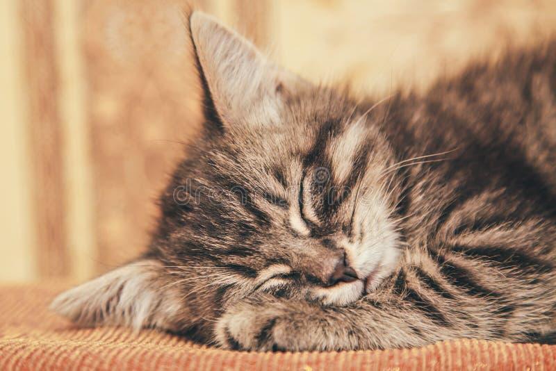 睡觉在长沙发的灰色小猫 免版税库存照片