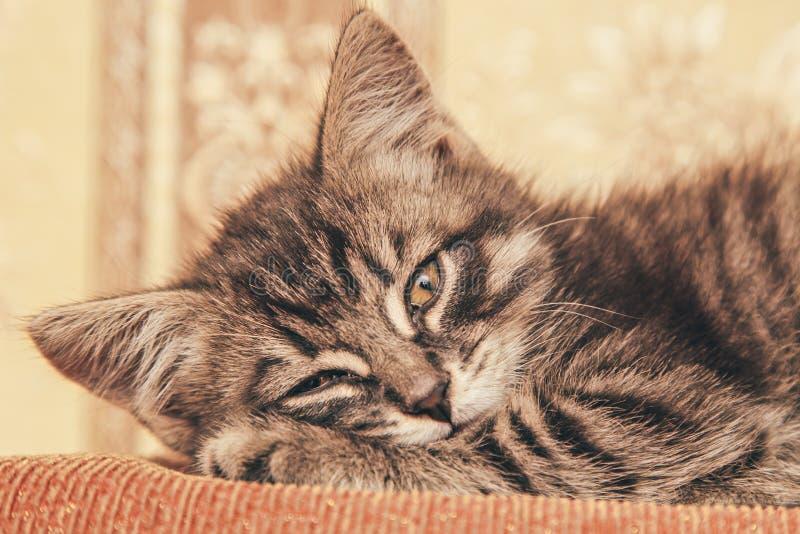 睡觉在长沙发的灰色小猫 库存图片