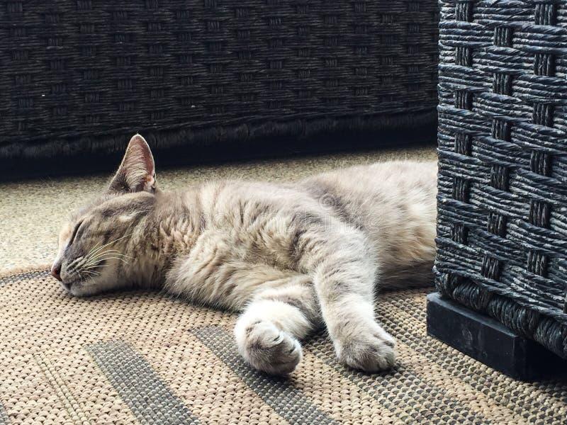 睡觉在黄麻地毯的虎斑猫 库存照片