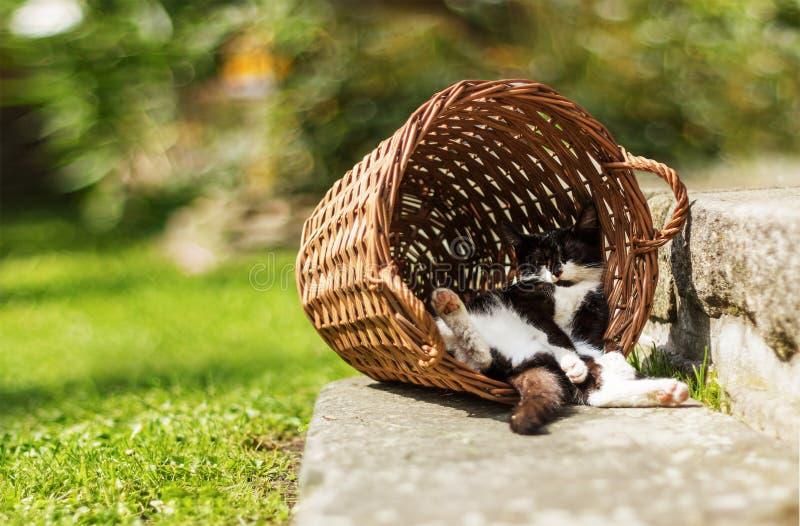 睡觉在滑稽的位置的疲乏的小猫掩藏在葡萄酒篮子 库存图片