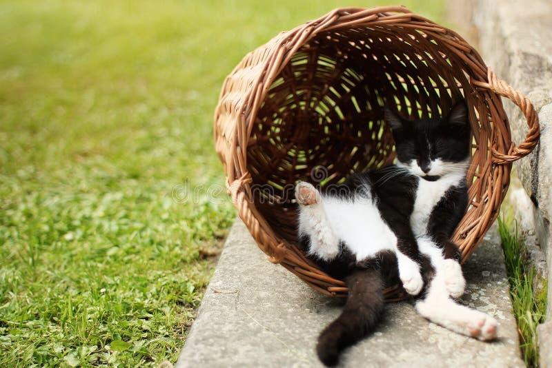 睡觉在滑稽的位置的疲乏的小猫掩藏在葡萄酒篮子 图库摄影