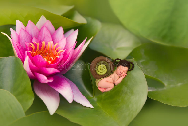 睡觉在waterlily叶子的婴孩蜗牛 免版税图库摄影