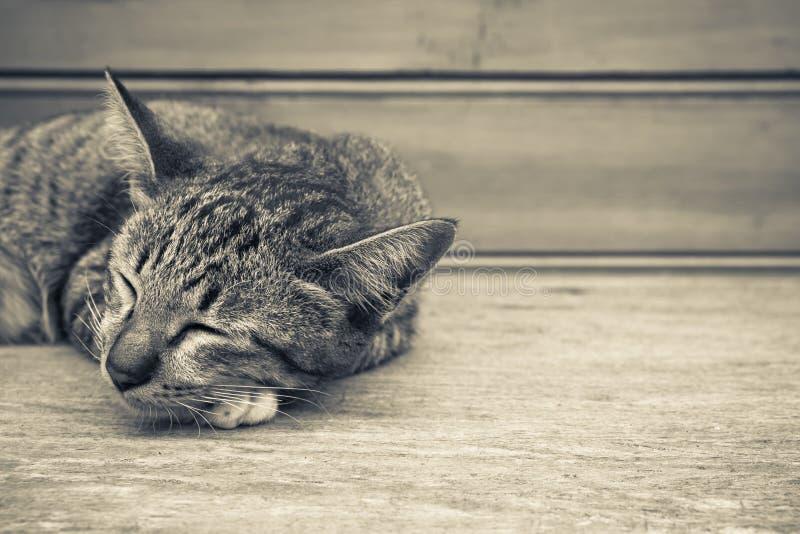 睡觉小猫 库存照片