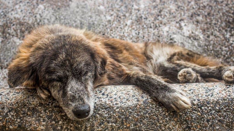 睡觉户外在一条石长凳的老笨蛋 在街道放弃的一只哀伤和资深流浪狗 库存照片