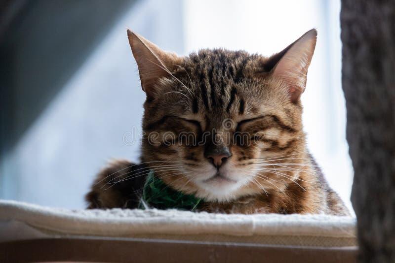 睡觉猫的特写镜头 库存照片