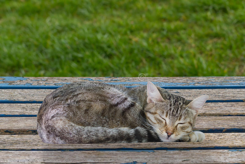 睡觉虎斑猫 免版税图库摄影