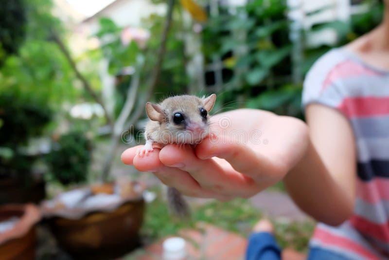 睡鼠 免版税库存照片