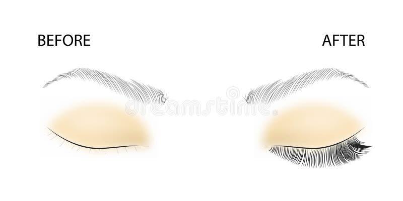 睫毛引伸的传染媒介例证 睫毛引伸的例证:前后 库存例证