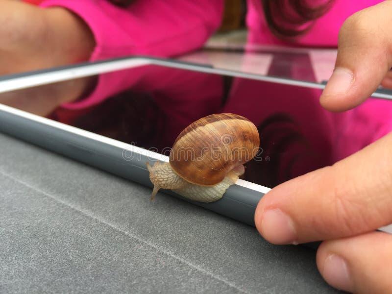 矛盾:技术对蜗牛 库存照片
