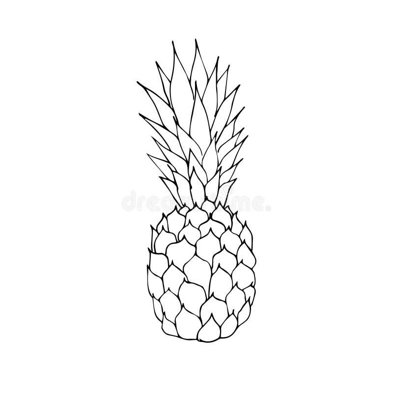 矢量黑色轮廓草图菠萝松苹果 库存例证