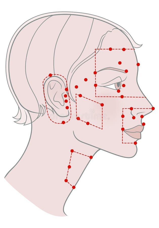 短发型女婴侧写模板的主动针灸穴位 向量例证