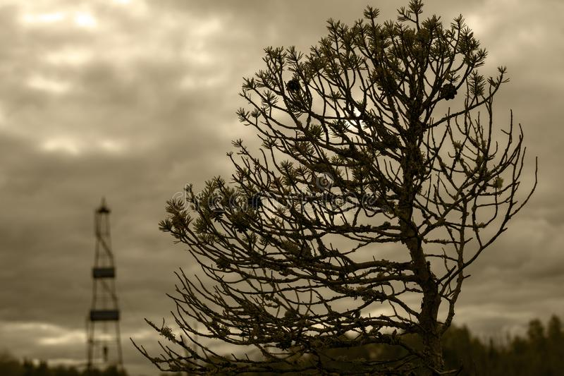 矮小的树和石油钻井在背景中 黑白照片 免版税图库摄影