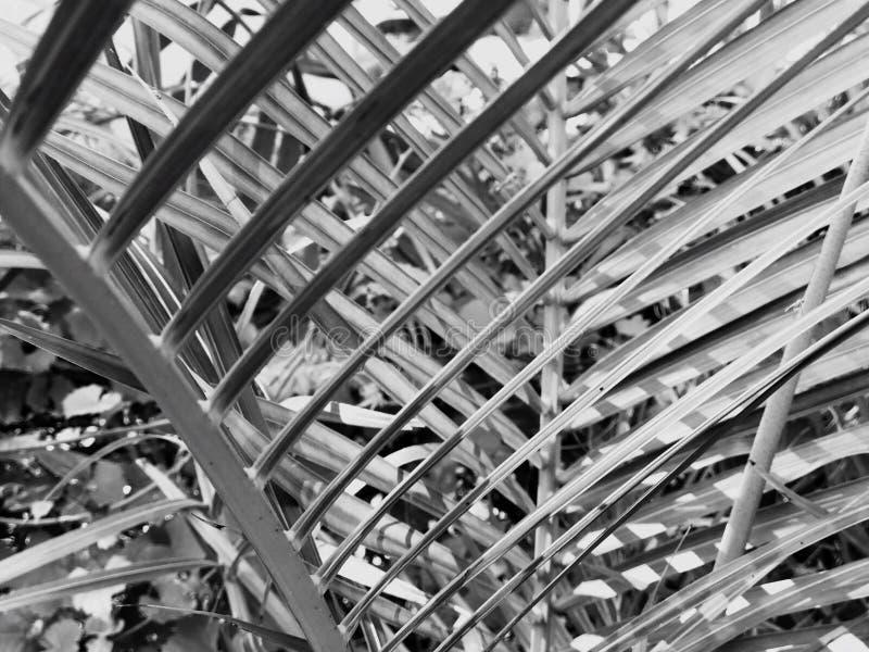 矮棕榈条夏天 免版税库存照片