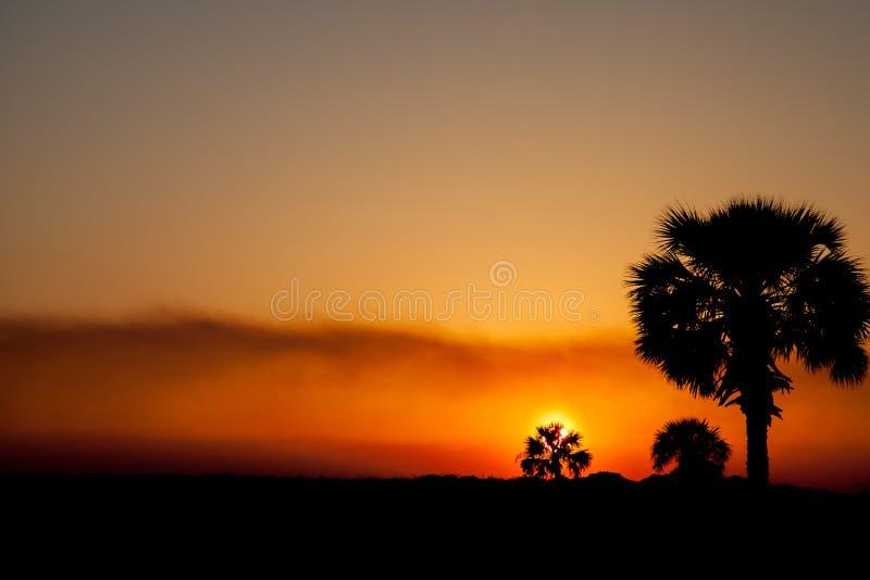 矮棕榈条树和橙色日落 免版税库存图片