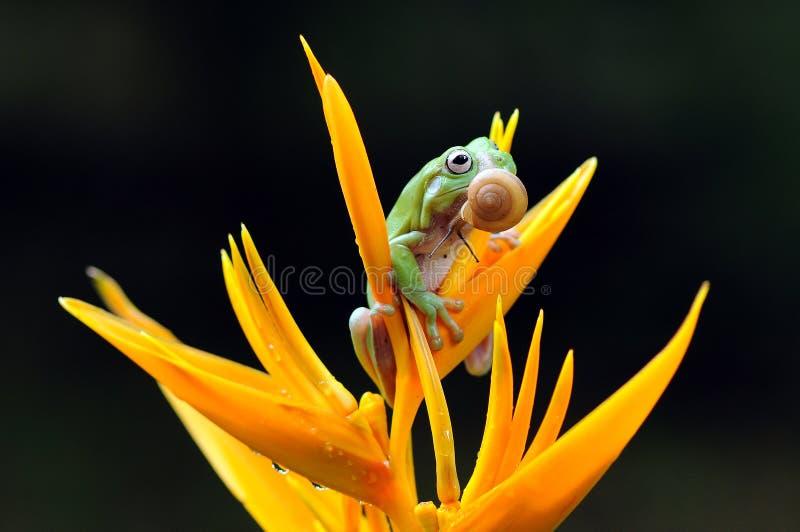 矮胖的雨蛙 免版税库存照片