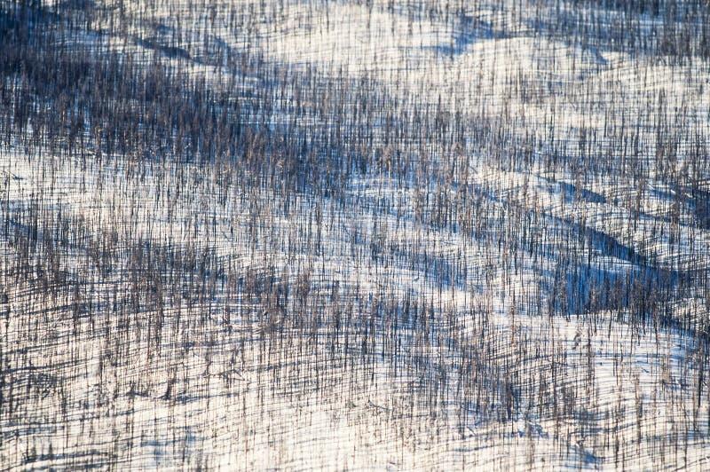黄石公园空中照片  库存图片