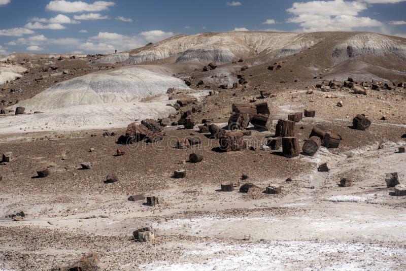 石化林国家公园 免版税库存图片