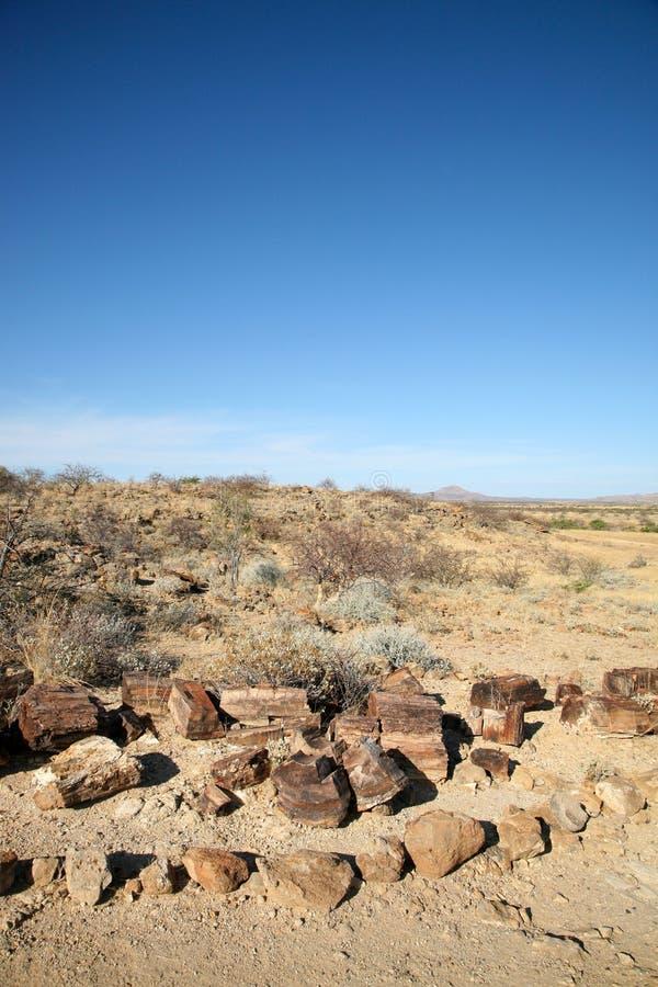 石化树干和沙漠在纳米比亚 库存图片