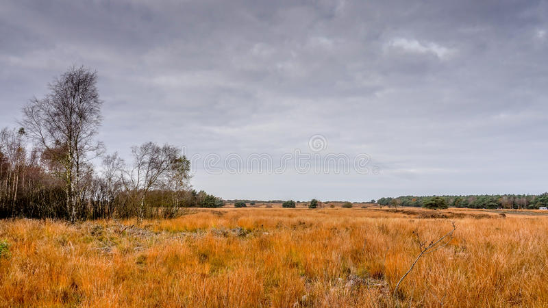 Download 石南花领域在秋天 库存照片. 图片 包括有 本质, 增长, 天空, 的treadled, 种类, 生活, 黄昏 - 59105946