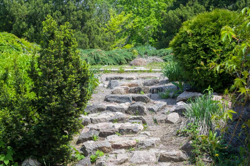 石台阶通过具球果种植在庭院里 免版税库存照片