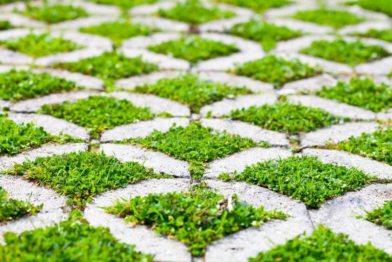 石块步行道路在有绿草的公园 库存图片